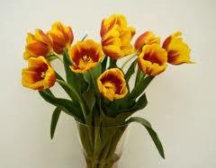 Kwiaty i ich świeżość